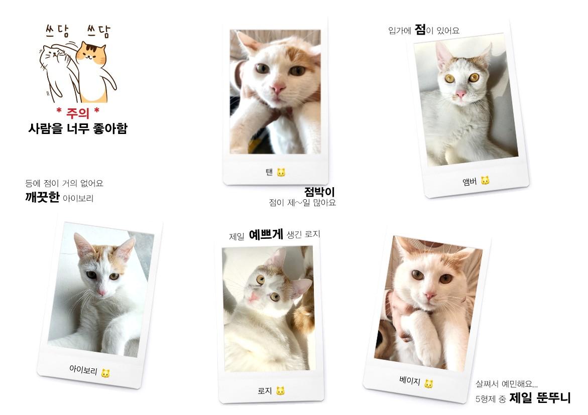 #1. 러브영란 5형제 – 사무실의 귀여운 마스코트를 소개합니다!